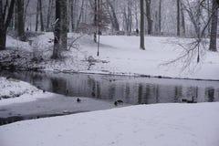 Winter in Park 6 Lizenzfreies Stockfoto