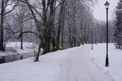 Winter in Park 7 Stockfoto