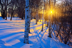 Winter park. Beautiful sunset in winter park, Russia Royalty Free Stock Photos