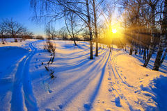 Winter park. Beautiful sunset in winter park Royalty Free Stock Photo