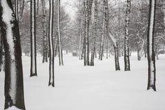 Winter in park. Stock Photo