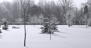 Winter park. Trees in winter park after a snowfall Royalty Free Stock Photo