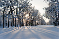 Winter in the park Stock Photography