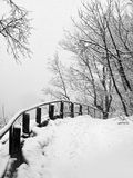 Winter in park Royalty Free Stock Photo