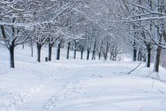 Winter in the park. Stock Photos
