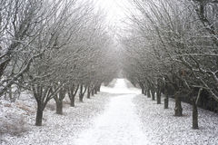 Winter park Royalty Free Stock Images