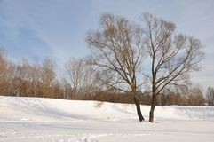 The winter park. Royalty Free Stock Photography