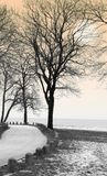 Winter Park. Winter scene with trees and lake Royalty Free Stock Photography