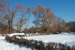 Winter in park. Snow-covered bushes and paths in winter park stock image