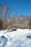 Winter in park. Snow-covered bushes and paths in winter park Royalty Free Stock Photography