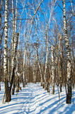 Winter in park. Snow-covered trees and paths in winter park royalty free stock photography