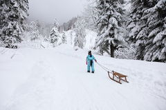 Winter park. Girl takes a sled in winter park Stock Image