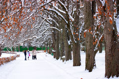 Winter park. Stock Image