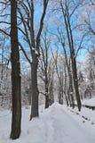 Winter park. Kioshkovete Park, Bulgaria after it was raining snow Stock Photos