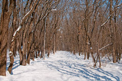 Winter in the Park. Alley in the park in winter Royalty Free Stock Photos