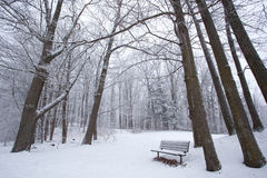 Winter in a Park Royalty Free Stock Image