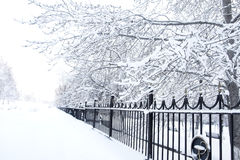 Winter park. Winter scene. Snow-covered trees and forged fence of park Stock Image