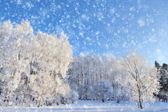 Winter park Royalty Free Stock Photo