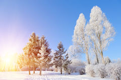 Winter park. In snow in sunny day Royalty Free Stock Image