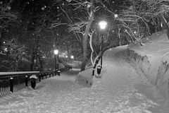 Winter in the park. Beautiful winter evening in the park royalty free stock image