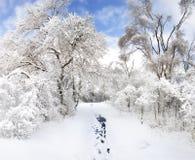 Winter Park Στοκ Εικόνες