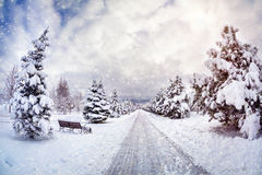 Free Winter Park Stock Photography - 35742502
