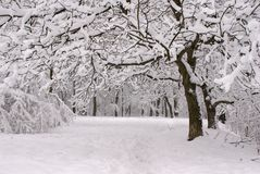 Winter park. The first snow in a park Stock Photography