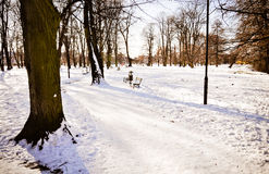 Winter in park Royalty Free Stock Photos