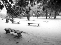 Winter in park. Three benches covered with pure white snow standing in a park in winter stock images
