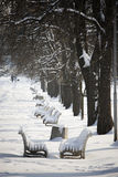 Winter in the park. Alley in the park with benches Royalty Free Stock Photos