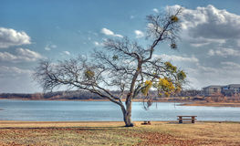 Winter at the Park. A solitary tree stands guard over a picnic table alongside a lake Stock Image