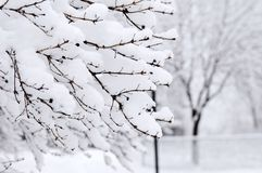 Winter park. Landscape with snow covered trees Stock Photo