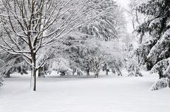 Winter park Stock Photography