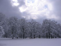 Winter in the Park. Trees full of snow royalty free stock images