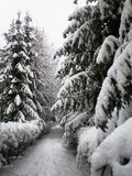 In winter park Royalty Free Stock Images