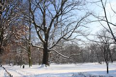 Winter In The Park. Winter in the Municipal South Park in Wroclaw 2009 Royalty Free Stock Image