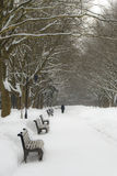 Winter park alley Royalty Free Stock Photography