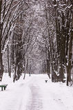 Winter park alley. Royalty Free Stock Photos