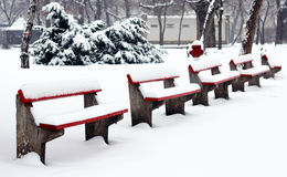 Winter park with benches Stock Photos