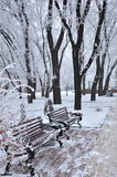 Winter park, benches Stock Photo