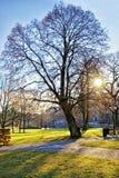 Winter park in center of Riga Stock Image