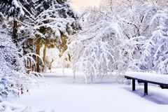 Winter park in Christmas time Stock Photo