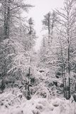 Winter park in cold morning with snow - vintage look Stock Images