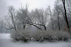 Winter park Royalty Free Stock Image