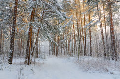 Winter park covered with snow in a sunset light Royalty Free Stock Photos