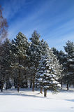 Winter park covered with snow in Truskavets Royalty Free Stock Photo