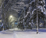 Winter park covered with white snow Stock Image