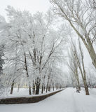 Winter park covered with white snow Stock Photo