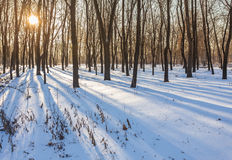 Winter park covered with white snow Stock Photography