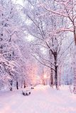 Winter park before dawn in the light of a lantern. Benches and path in the snow. stock photography